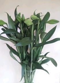 הפרחים נפחתים תוך 5-7 ימים.