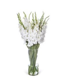 סייפן לבן,  20 ענפים (הפרחים מגיעים סגורים)