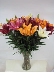 ליליות מיקס, זר ענק- 15 ענפים (הפרחים מגיעים סגורים)